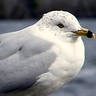 Sea Gull by WeeZie