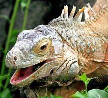 Green Iguana by Jo Nijenhuis