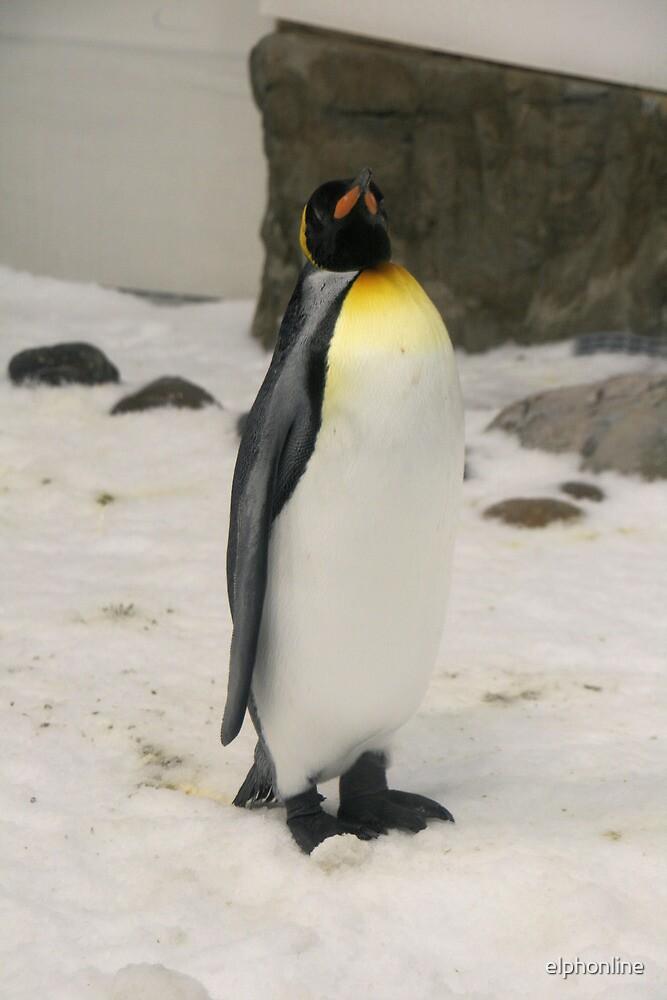 King Penguin, Melbourne Aquarium. by elphonline