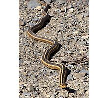 First Snake of the Season Photographic Print