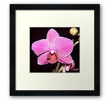 Single Orchid Framed Print