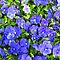 Blue Pansy Garden by Donna Grayson