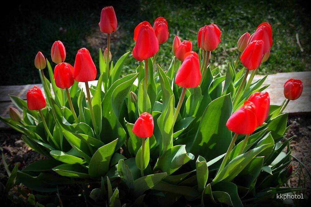 Red Tulip Bouquet by kkphoto1