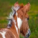 Choctaw Foal by Sue Ratcliffe