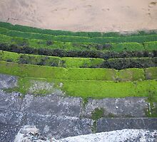 Moss Covered Stairs by Danielle  La Valle