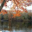 Autumn Foliage in New England by Alberto  DeJesus