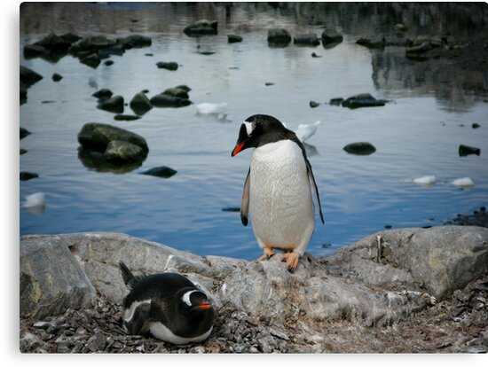 Penguins by Craig Baron
