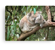 Koala bear mother and baby Canvas Print