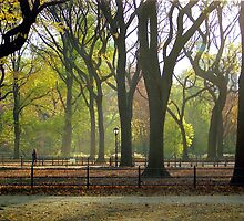Autumn in Central Park, NYC by Alberto  DeJesus