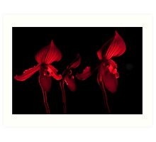 3 red orchids Art Print