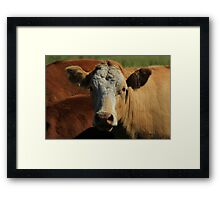 Cow on the Prairies Framed Print