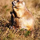 Prarie Dog Days by Irene Walters