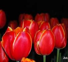 Nightfall and Tulips by Mattie Bryant