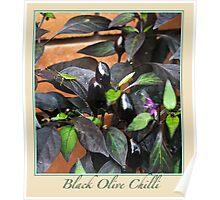 Black Olive Chilli - Chilli Collection #2 Poster