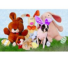 Easter Boston Bunnies .. Photographic Print