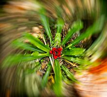 Spin Plant by Glauco Meneghelli