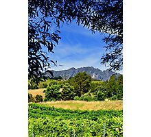 Australia, Tasmania Lake Barrington Vineyard Photographic Print