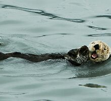 Sea Otter - Alaska  by Melissa Seaback