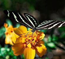 Zebra on a Flower by Saija  Lehtonen