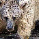 Brown Bear by Dave Cauchi