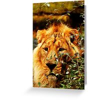 Camouflaged Asiatic Lion Greeting Card