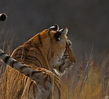 The Thinking Tiger by Sandeep Mall