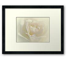Soft White Rose Framed Print