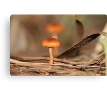 Tom Thumb Canvas Print
