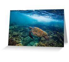 Turtle at Hono Aunau Greeting Card