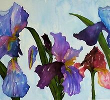 IRIS by ANNETTE HAGGER