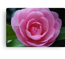 Softh Pink Rose Canvas Print
