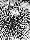 Urchin Macro by Leon Heyns