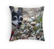 Vernal Equinox 2011 ~ Baby Bella Throw Pillow