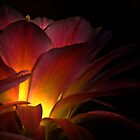 Inner Glow by Linda Sparks
