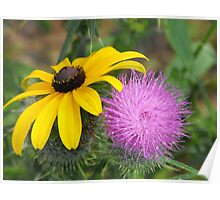 Black Eyed Susan and Bull Thistle Poster
