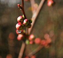 tear of spring  by Jeff Stroud