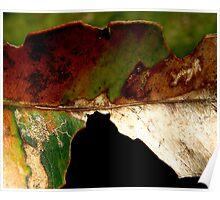 Leaf... Poster