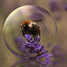 Hummel on Lavender by RosiLorz