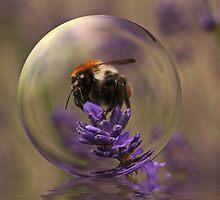 Hummel on Lavender by RosiLorz