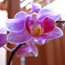 Last Orchid Blossoms by glennc70000