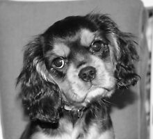 Puppy Maximus by daphsam