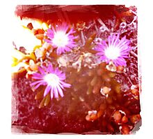 Hipsta beach flowers Photographic Print