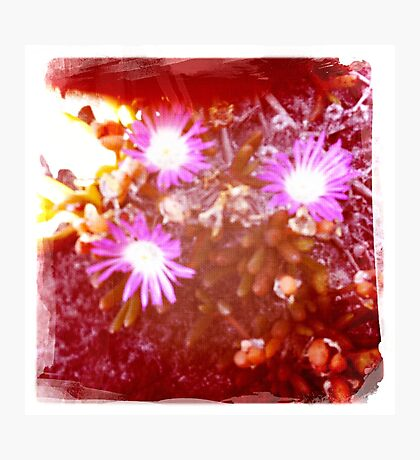 Hipsta beach flowers Photographic Print