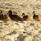 all of my ducks in a row! by rue2