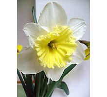 White and yellow Photographic Print