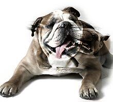 Dog Mastiff by Evgeniy Lankin