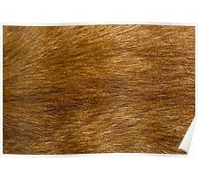 The Cat Fur Poster