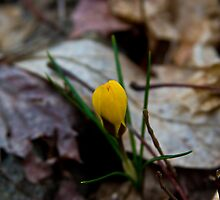 The Start Of Spring by Raymond Holt