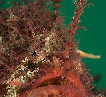 Interview with the Tangler. by James Peake Nature Photography.