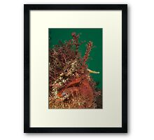 Interview with the Tangler. Framed Print